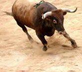 Búfalo ou Touro