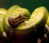 Cobra enrolada no corpo